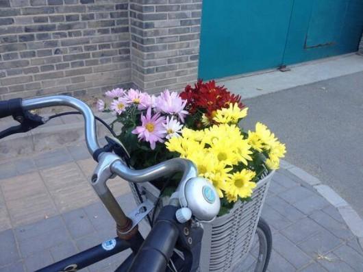 Ai Weiwei's flowers