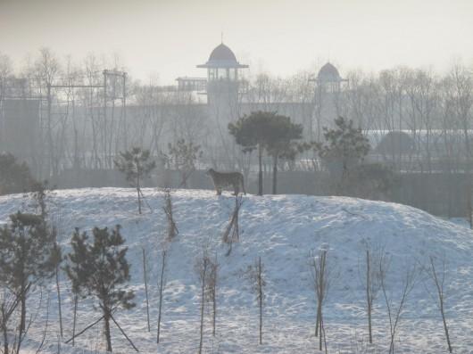 Harbin 4