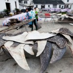 Watch: Zhejiang China's Shark Slaughter Capital