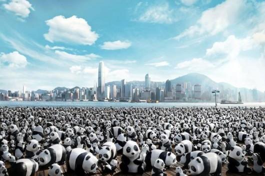 1600 pandas in Hong Kong