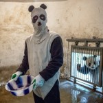 Creepy panda by Ami Vitale featured image