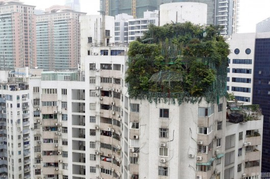 Guangzhou highrise forest