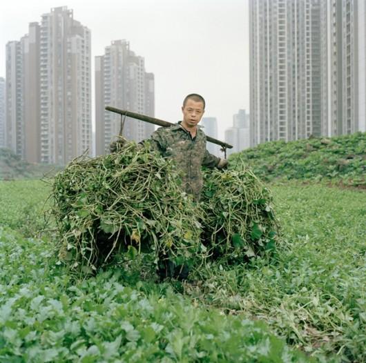 Chongqing's urban farmers