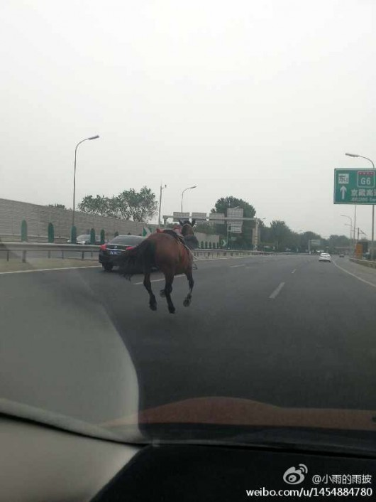 Horse and dog on Beijing's Fifth Ring Road 3