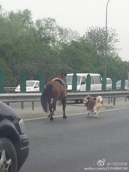 Horse and dog on Beijing's Fifth Ring Road 4