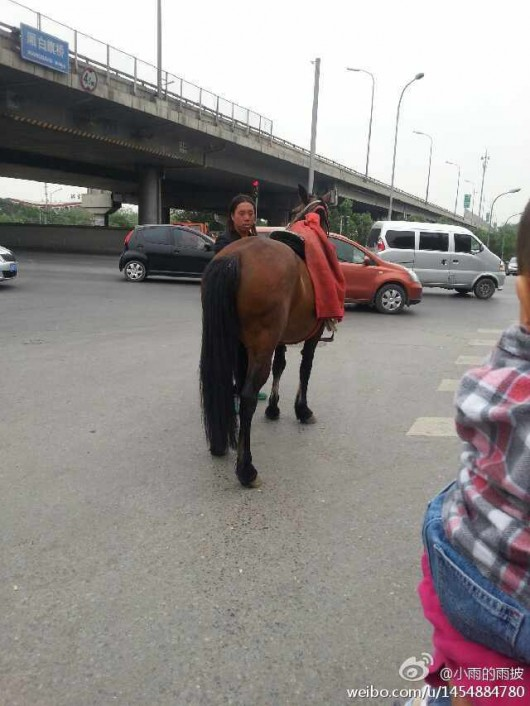 Horse and dog on Beijing's Fifth Ring Road 5