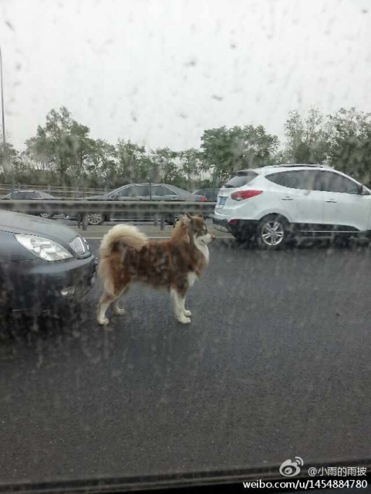 Horse and dog on Beijing's Fifth Ring Road